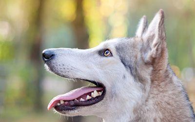 46++ Anjing untuk jaga rumah terbaru